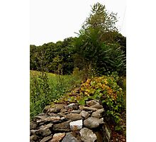 Mossy stone fence Photographic Print