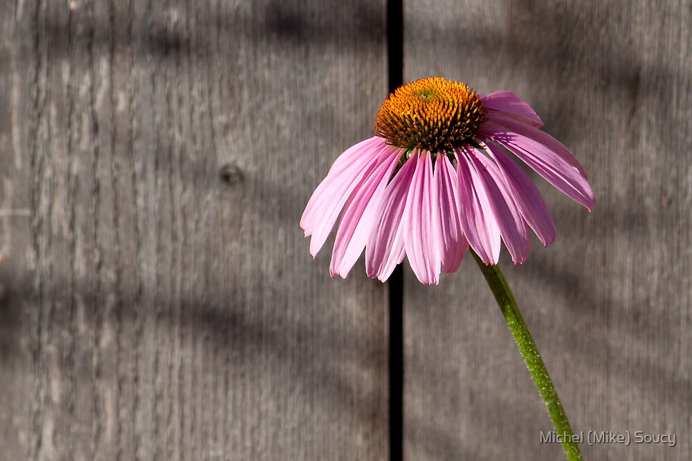 Purple Cone by michelsoucy
