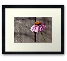Purple Cone Framed Print