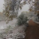 Frosted Path Along My Favorite Crick by dfrahm