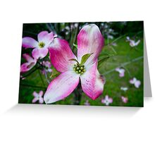 Pink Dogwood Blossom with a Twist Greeting Card