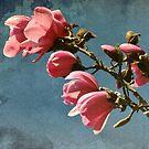 Magnolias - Van Dusen Botanical Garden by Kathryn  Young