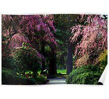 Cherry blossoms in spring -Van Dusen Botanical gardens Poster