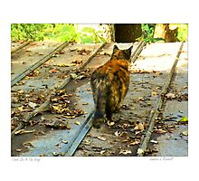 Torti On A Tin Roof Photographic Print