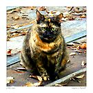 Little LuLu/ Torti cat  by Sandra Russell