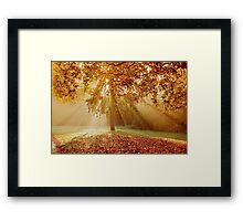 Autumn sunburst Framed Print