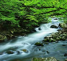 Spring on the Middle Prong River, Tremont, TN by Jerry Philpot
