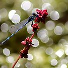 DragonFly by BlackSunshine