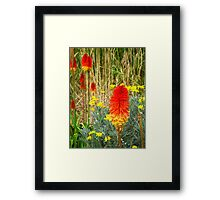Red Hot Poker: 02 Framed Print