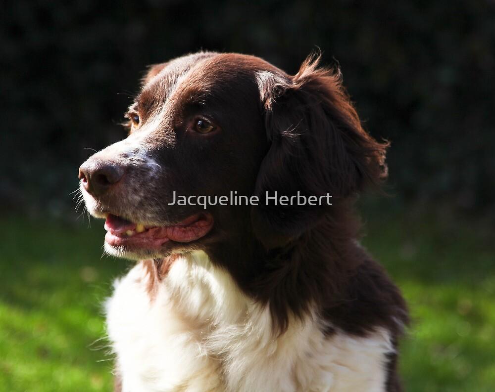 Portraitsession of Luca, a Dutch Partridge dog by Jacqueline Herbert
