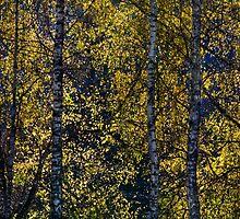 falls splendor by Jean Poulton