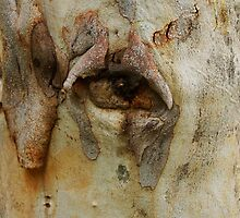 The Face Within by Matt Hill