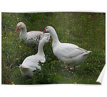 Goosey, Goosey and Gander !! Poster