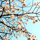 Blossoms - Kew, London by MaggieGrace