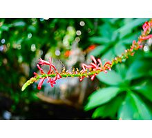 Flower Stem, Kew Gardens Photographic Print
