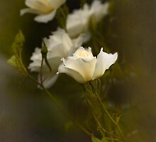 White Gift by Dianne English