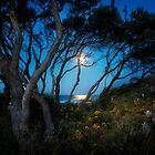 Moonrise, Emerald Beach NSW, Australia by Normf