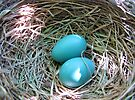 Robin's Nest May 22 2009 by Ron Russell