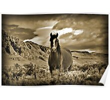 Solo Wild Horse Poster