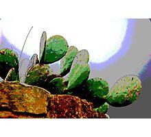 Cactus on a hillside  Photographic Print