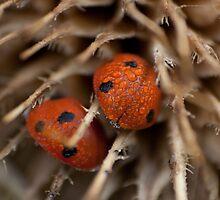 Ladybug by LuPru
