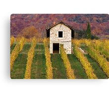 Autumn light in the vineyard Canvas Print