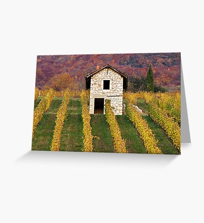 Autumn light in the vineyard Greeting Card
