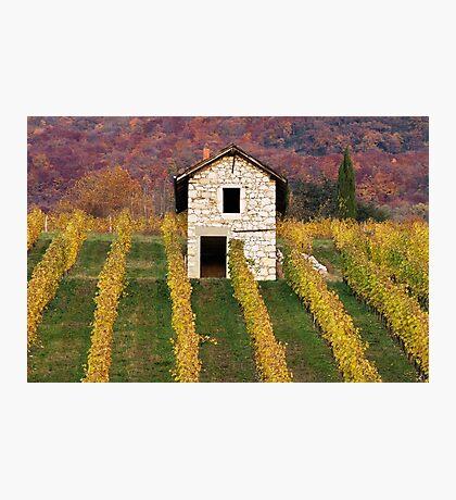 Autumn light in the vineyard Photographic Print