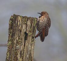 Flicker by Mike  Kinney
