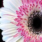 Gerbera Floral iPhone Case by Jessica Jenney