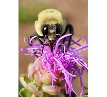 A Bumble Bee Photographic Print
