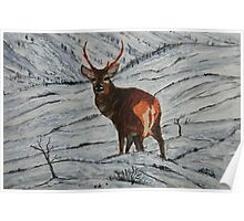 Stag in Winter Poster