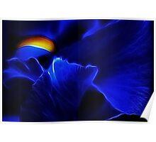 Blue Iris Poster