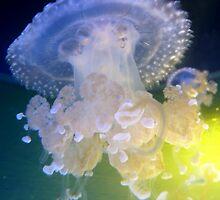 Jellyfish Dance by HeklaHekla