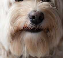 Teddy, my pet terrier. by David A. L. Davies