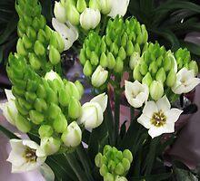 Happy Colors Of Spring by marilyn diaz
