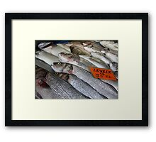 Freshwater Perch for Sale Framed Print