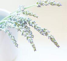 Lavender  by Nicola  Pearson