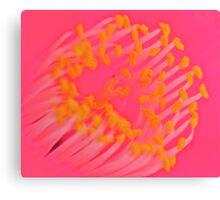 Macro Camellia Canvas Print