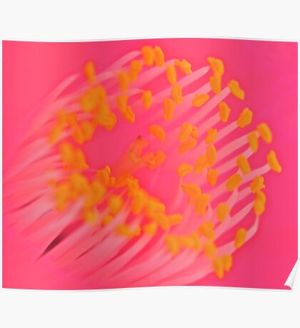 Macro Camellia Poster