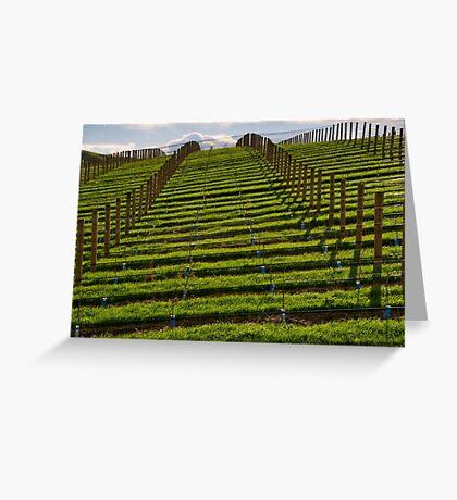 Marlborough Vineyard Greeting Card