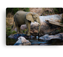 The Watering Hole Canvas Print