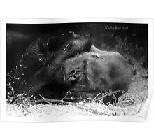 Sleepy gorilla Poster