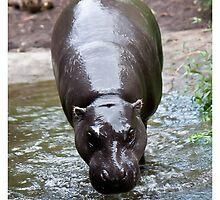 Running hippo by bluetaipan