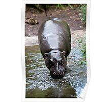 Running hippo Poster