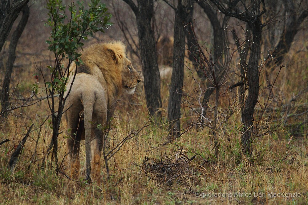 Soaked by Explorations Africa Dan MacKenzie