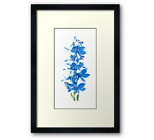 Blue Lady Orchid (Thelymitra crinita) Framed Print