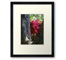 Bougainvillea Framed Print