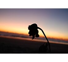 watching the setting sun Photographic Print