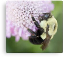 Bumble Bee close up Metal Print